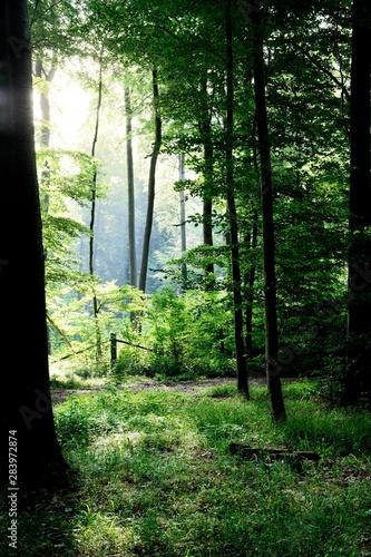 Foto auf Acrylglas Wald im Nebel birch quiet fern