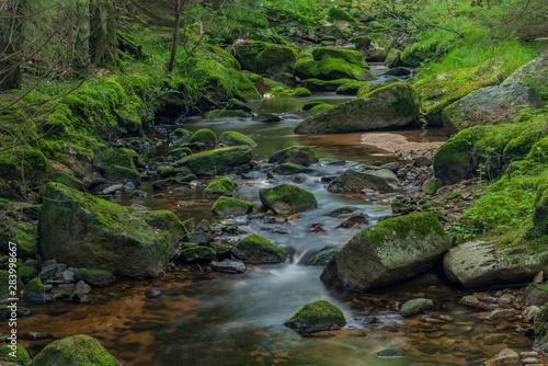 Printed kitchen splashbacks River Bystrina creek in summer nice morning in Krusne mountains near Sokolov town