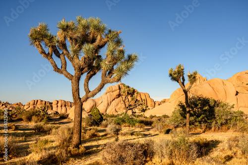Joshua Tree National Park, Mojave Desert, California Canvas Print