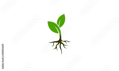Plant vector Fotobehang