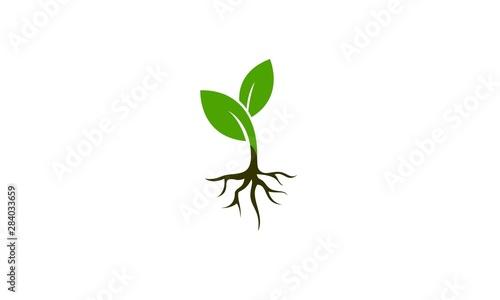 Canvas Plant vector