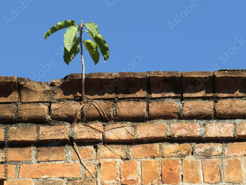 Fotobehang Palm boom persistence of nature, plant growing in brick