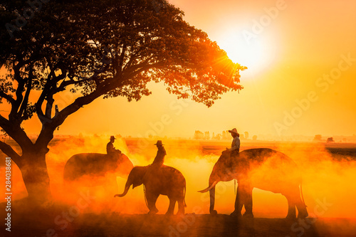 Foto op Canvas Paarden Silhouette elephant on the background of sunset. The elephant walking on a rice field in the morning. Elephant village lifestyle. The activities at Krapho, Tha Tum District, Surin, Thailand.
