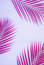Palm Tree On Colorful Background.