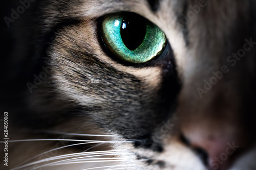 Cat eye macro closeup animal - 284050063