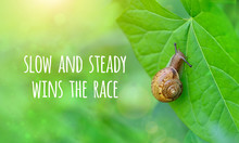 Slow And Steady Wins The Race - Inspiration Motivation Quote. Snail On Green Leaf. Beautiful Scene Of Nature - Snail Crawling On Leaf. Concept Of Motivation And Commitment To The Goal. Soft Focus
