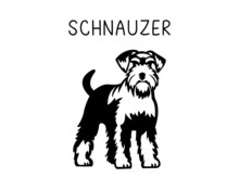 Schnauzer Vector Illustration In Black And White