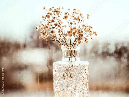 Bouquet of dried Baby's breath flowers in glass bottle Canvas Print