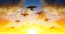 Silhouette Flock Of Birds Flyi...