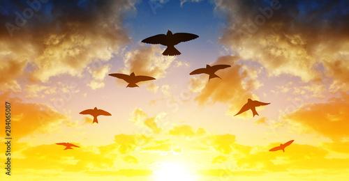 Fotografía Silhouette flock of birds flying in V-formation at sunset.