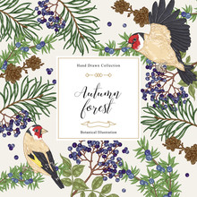 Autumn Trees And Birds Background. Pine, Elderberry, Juniper Branches And Goldfinches. Hand Drawn Vector Illustration. Colorful Vintage Engraving.