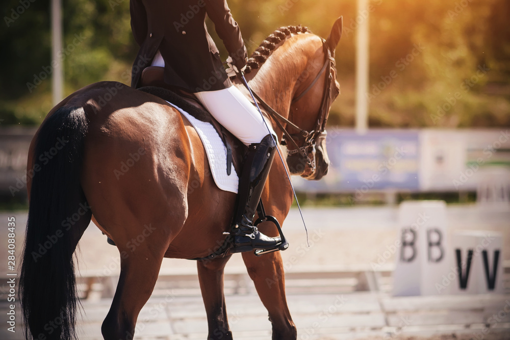 Fototapeta The rider in a black and white suit performs the task in equestrian competitions in dressage riding a beautiful Bay horse, dressed in ammunition for equestrian sports.