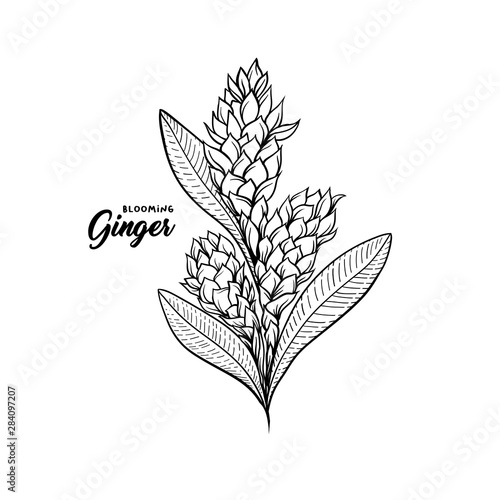Photo Gingerflower blossoming plant spice