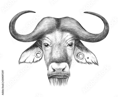 Hand drawn anthropomorphic portrait of buffalo