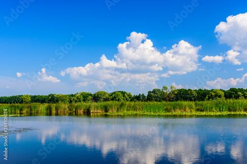 Fototapeta Summer landscape with the green trees and river obraz na płótnie