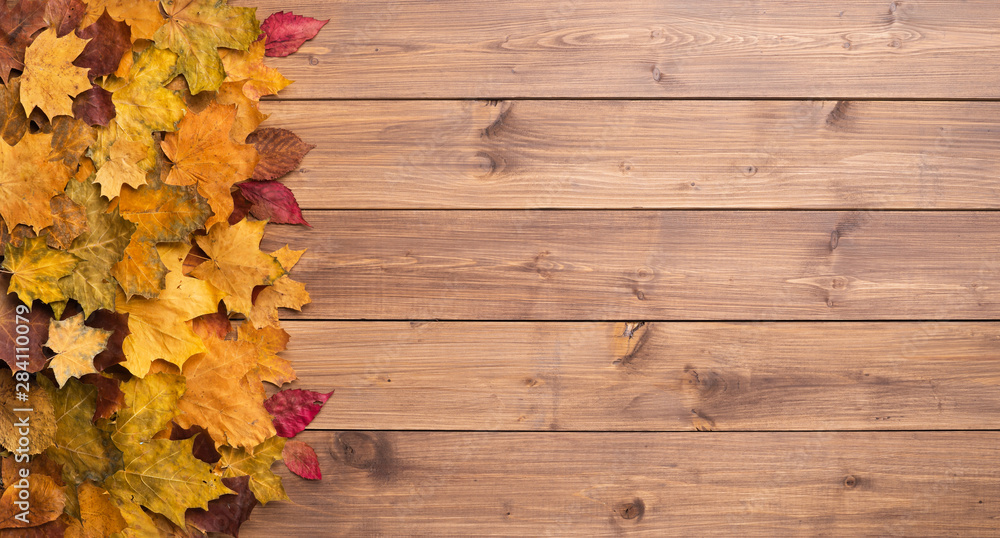 Fototapety, obrazy: Seasonal autumn background. Frame of colorful maple leaves over grey.
