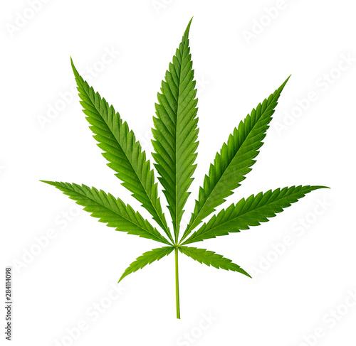 Photo  Cannabis leaf isolated on white background