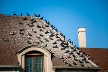Roof Covered With Pigeon Dropp...