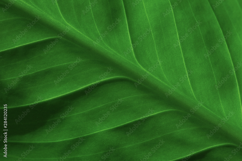 Fototapety, obrazy: Abstract green striped nature background, vintage tone. green textured leaf of the plant. natural eco background.