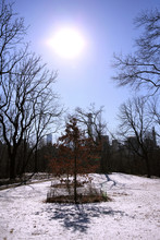 Central Park In The Snow, Manh...