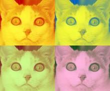 Retrato De Gato Warhol