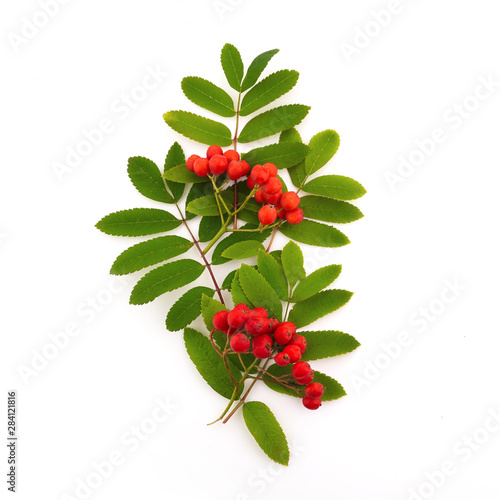 red cluster of rowan berries with leaves isolated on white Wallpaper Mural
