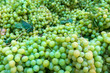 Leinwandbild Motiv Green Grape