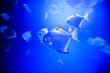 Leinwandbild Motiv Wonderful and beautiful underwater world with corals and tropical fish.