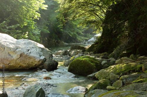 Fototapeten Forest river 【山梨県】尾白川渓谷