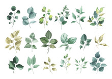 Collection Of Watercolor Greenery Floral Rose Leaf Plant