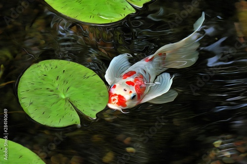 Slika na platnu Beautiful Japanese koi fish