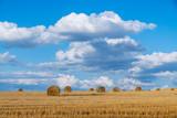 Bele siana  na polu pod chmurami