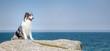 canvas print picture - Hübscher Hund steht auf einem Felsen im Hintergrund blauer Himmel und Meer