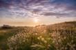canvas print picture - Wanderweg an der Küste der Bretagne mit Gräsern in Abendstimmung