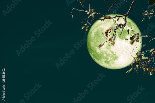 super full harvest moon on night sky back branch tree Wallpaper Mural