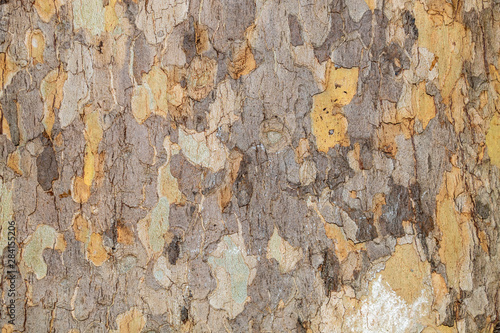 Deurstickers Oude vuile getextureerde muur Closeup Tree Bark Texture Background