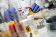 Police Expert Extracts Traces Of Blood In A Swab For Analysis In The Laboratory Scientist