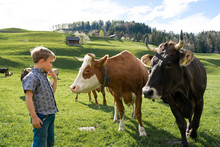 Boy Looking At Cows On Pasture