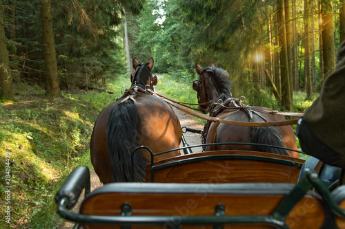 Foto Two horses (Saxon Thuringian heavy warm blood) pull a carriage into green landscape