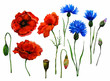 Leinwanddruck Bild - Wildflowers. Three flowering poppies and three cornflowers, one poppy head and four buds not opened. Watercolor.