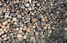 Background From Neatly Stacked Sawn Tree Trunks Overlooking The Back Of A Wooden Texture. Firewood Storage For Heating, Bonfires, Fireplaces.