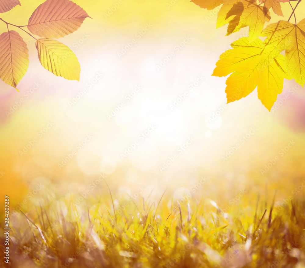 Fototapety, obrazy: Falling yellow leaves and grass bokeh background with sun beams.
