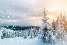 Winter Blue Landscape. Spruce Tree In Deep Snow On Mountain Clearing On Cold Sunny Day On Copy Space Background Of Cloudy Sky.