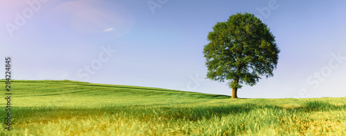 a-lonely-tree-on-a-green-meadow-a-vibrant-rural-landscape-with-blue-sky