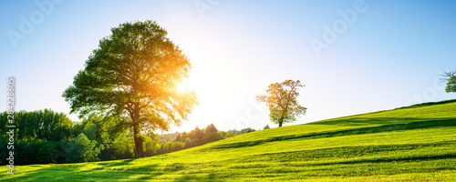 A lonely tree on a green meadow, a vibrant rural landscape with blue sky - 284228605