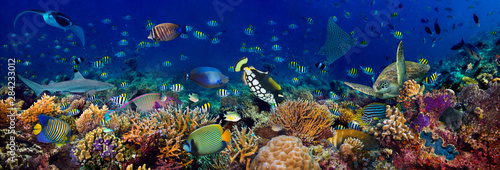 Türaufkleber Natur underwater coral reef landscape wide 3to1 panorama background in the deep blue ocean with colorful fish sea turtle marine wild life
