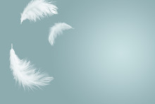 Abstract Solf White Feathers F...