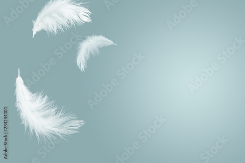 Fototapeta abstract solf white feathers floating in the air obraz