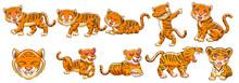 Tiger Vector Set Graphic Clipart Design