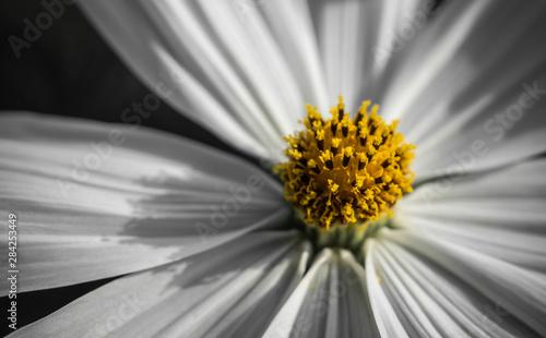 Fotografie, Tablou  Blütenstaub